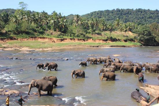 10 Destination in Sri Lanka