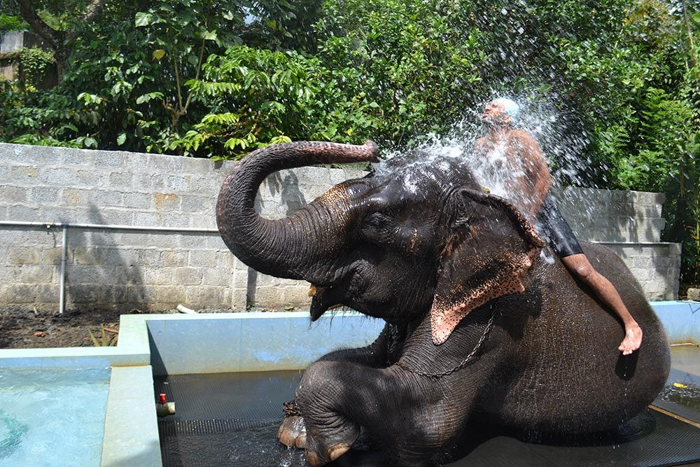 Top Places to Visit in Thekkady Elephant Junction