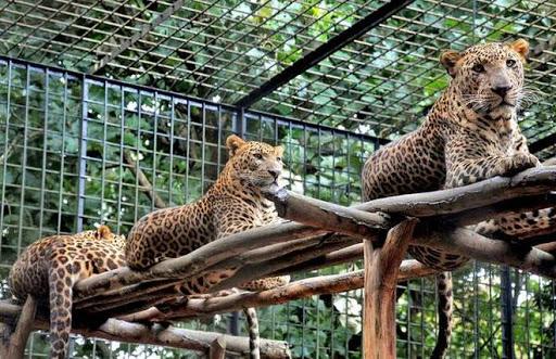 Kankaria Zoo