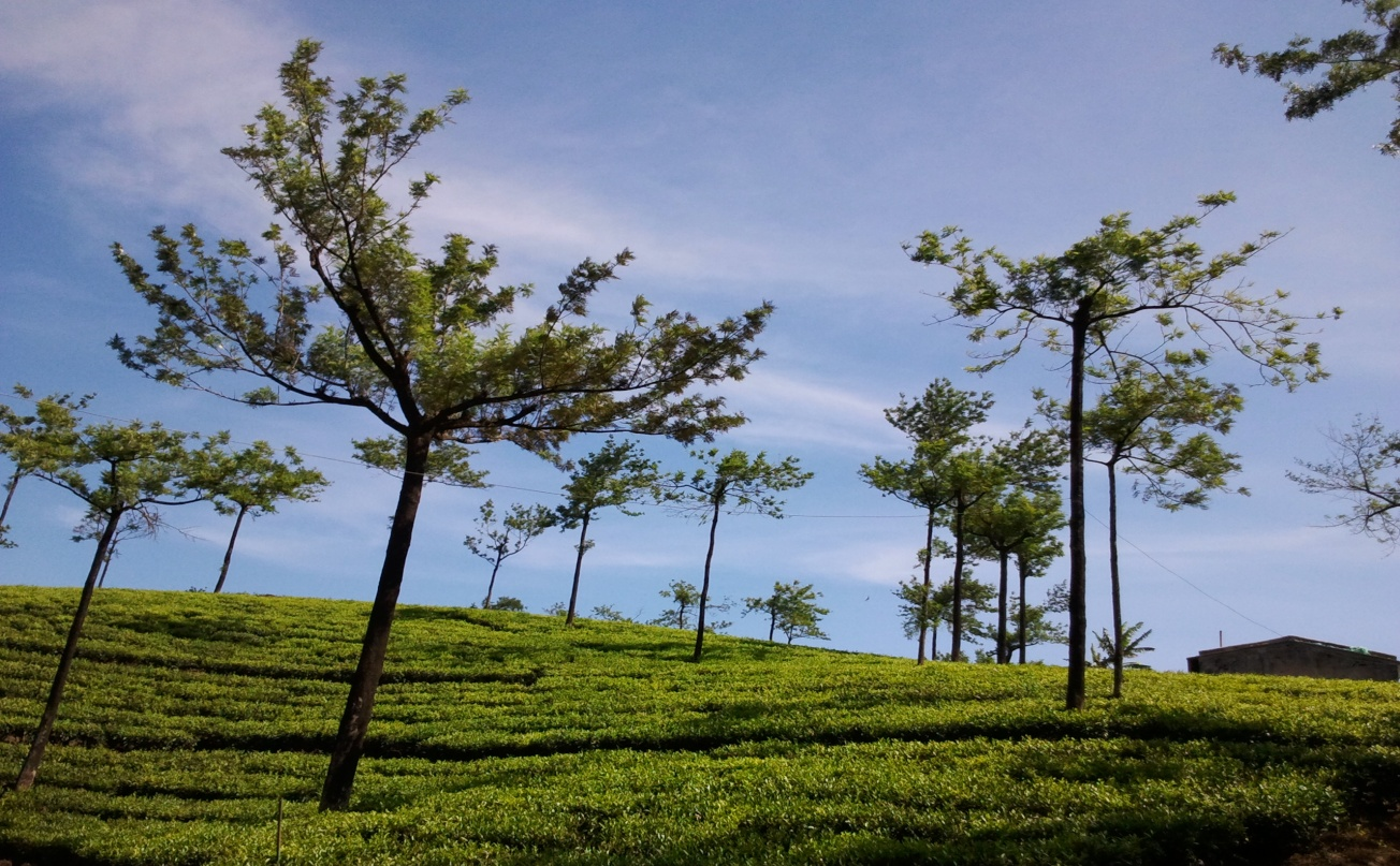 Top 10 Places to Visit in Thekkady Kumily