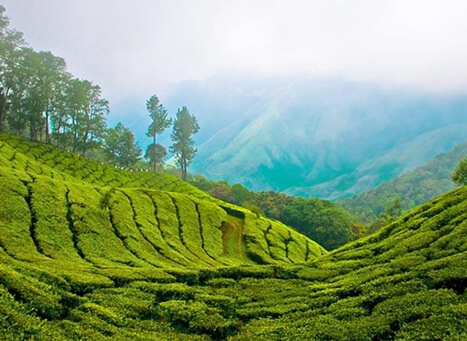 Top 10 Places to Visit in Thekkady Murikkady