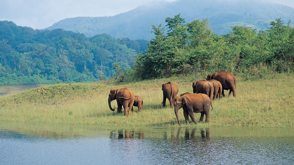 Top 10 Places to Visit in Thekkady Periyar Wildlife Sanctuary