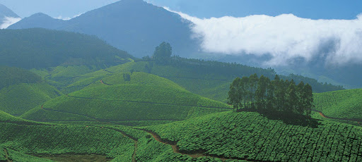 10 Places to Visit in Thekkady